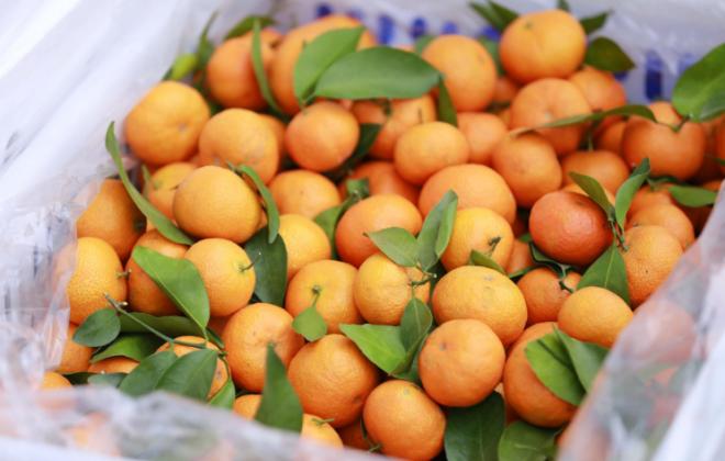 支付宝上线黄河助农专项计划 1分钱可兑换特色水果