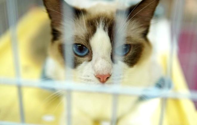艾瑞咨询:宠物生活医疗服务正摸索线上线下发展方式
